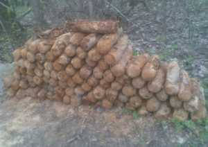 Около брянских деревень нашли 99 снарядов