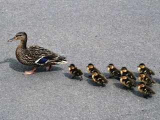 Под Брянском «Фиат» разбился из-за птиц на дороге