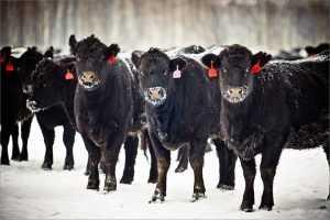 Брянской области дали мясной миллиард