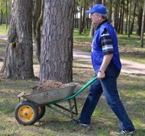Брянские чиновники посадили деревья в лесу около дома губернатора