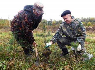 В брянских лесах посадят десять миллионов деревьев
