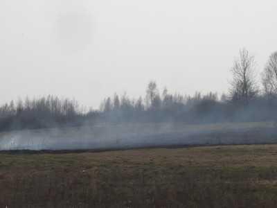В Трубчевском и Выгоничском районах загорелся лес