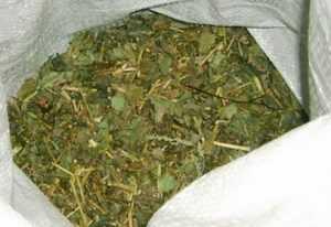Брянского уголовника будут судить за контрабанду маковых семян