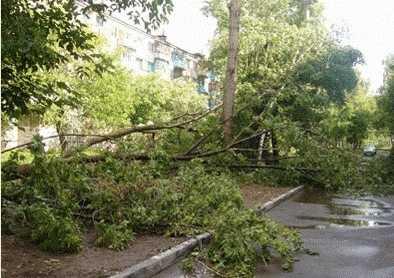 На Брянщине ожидается ураганный ветер, грозы и 30-градусная жара