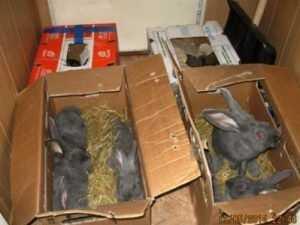 Из Брянской области выслали 10 украинских кроликов-нелегалов