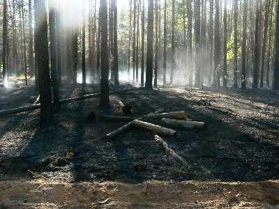 В Брянском районе 19 спасателей тушили лесной пожар