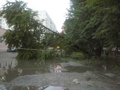 Ливень и ветер повалили в Брянске несколько деревьев
