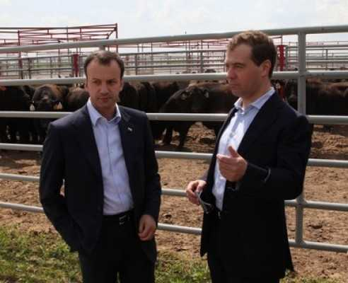 На мясное скотоводство Брянск получит половину российских субсидий