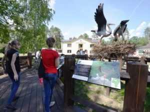 В брянском заповеднике открыли экологическую тропу