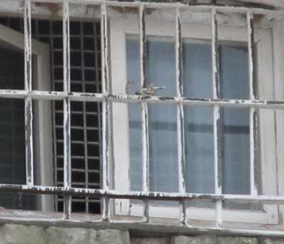 В изоляторе скончался задержанный брянец