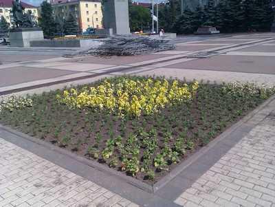 На площади Партизан появились патриотичные цветочки
