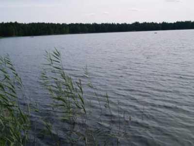 В Навлинском районе из воды подняли утопленника