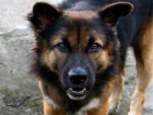 В брянском детском лагере собака напала на ребёнка