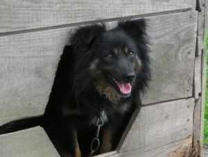 В Брянске суд запретил уничтожать собак