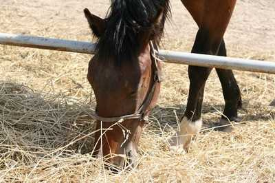 Кокино приглашает на чемпионат Брянской области по конному спорту