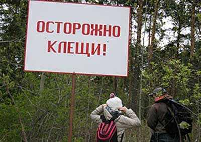 Клещи покусали 58 брянских детей