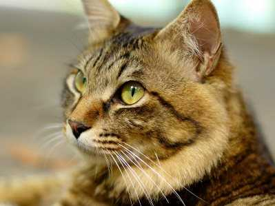 Брянский пенсионер зверски убил бывшую жену из-за кошек