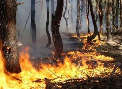 В брянском лесничестве потушили пожар