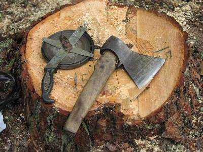 Под Брянском полицейские поймали  «чёрных лесорубов»