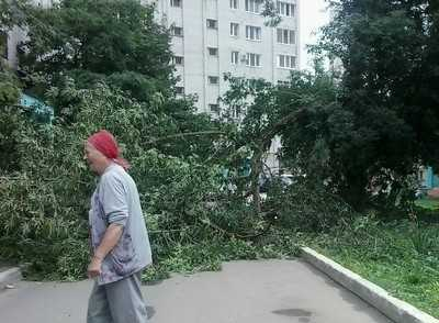 На улице Брянского фронта на автомобиль упало дерево
