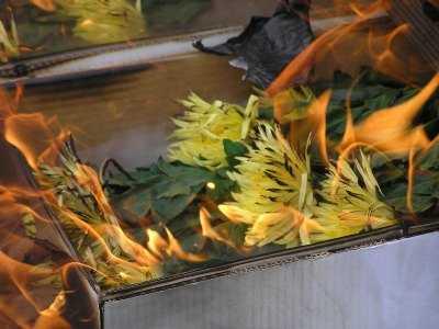 На Брянщине сожгли 540 голландских хризантем