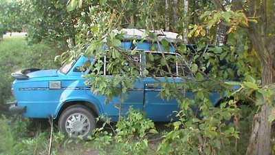 Дубровский автомобилист сломал нос и дерево