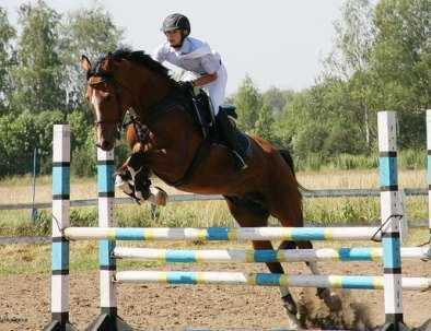 Брянцы успешно выступили на первенстве по конному спорту в Орле