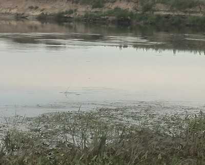 Под Брянском в озере утонул 25-летний парень