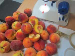 Брянцы вернули в Грецию 17 тонн заражённых персиков