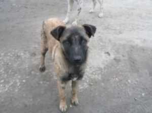 В Брянске возбуждено уголовное дело об убийстве собаки