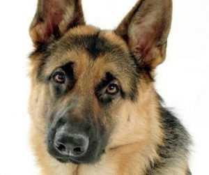 Живодёра, зверски убившего собаку в Брянске, пока не нашли