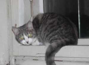 За убийство кошки на глазах у мальчика брянец заплатит 20 тысяч рублей
