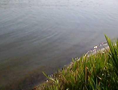 В брянском Мутном озере утонул 51-летний мужчина