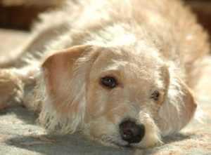 Брянские защитники животных требуют наказания для убийц собаки