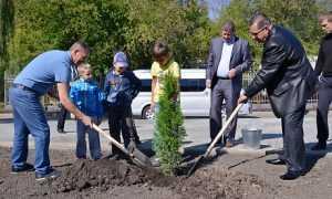 Чиновники подарили Брянску шоу с высадкой деревьев