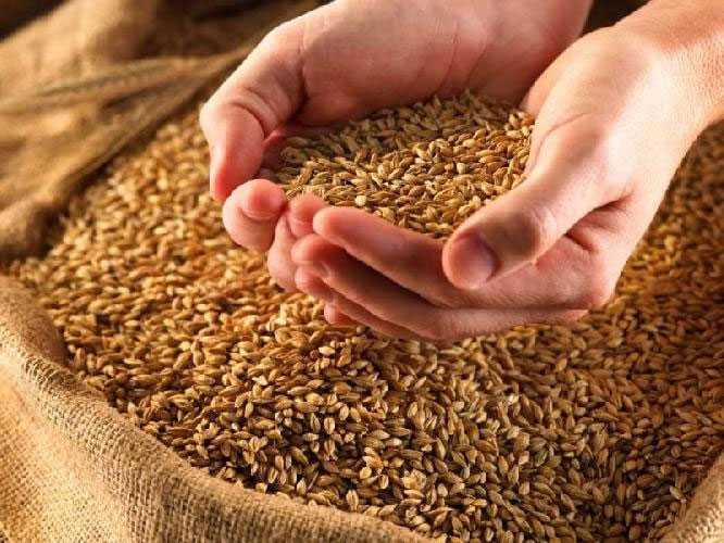 Из-за низких цен брянские крестьяне отказались продавать зерно
