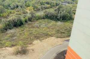 В Брянске на берегу Десны вырубили 350 деревьев