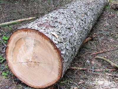 В Брянске расследуют гибель рабочего, убитого деревом