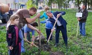 Предвыборные чудеса: брянский губернатор посадил клены
