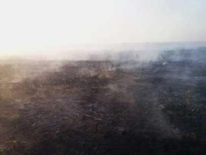 На Брянщине снова введён особый противопожарный режим (видео)