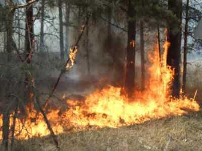 С брянскими пожарами в МЧС пообещали справиться за два дня