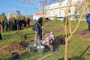 В Брянске появился Олимпийский сквер