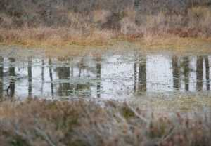Брянские спасатели вытащили из болота 79-летнего грибника