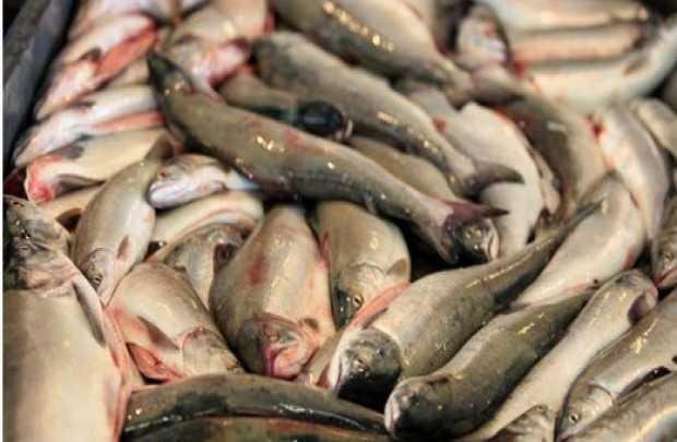 Районного прокурора задержали за незаконную рыбалку