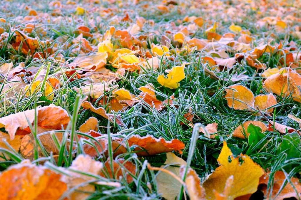 В Брянскую область пришли зимние морозы