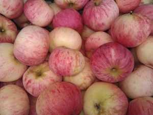 Раскрыта схема контрабанды польских яблок в Брянск и другие города