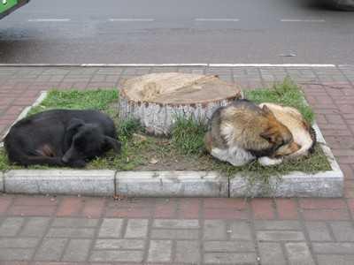 Брянский суд запретил фирме «Коллектор» убивать собак и кошек