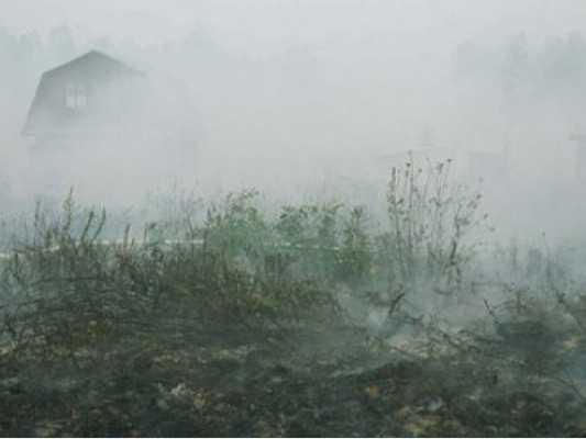 В связи с пожарами «зеленые» пожаловались на брянское управление МЧС