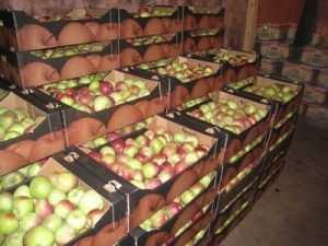 В Брянске выявлено 36 случаев продажи польских фруктов