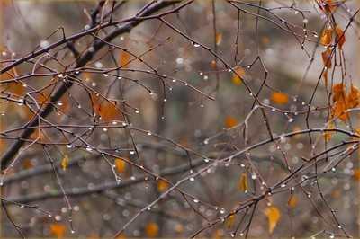 В воскресенье в Брянске температура воздуха поднимется до 11 градусов